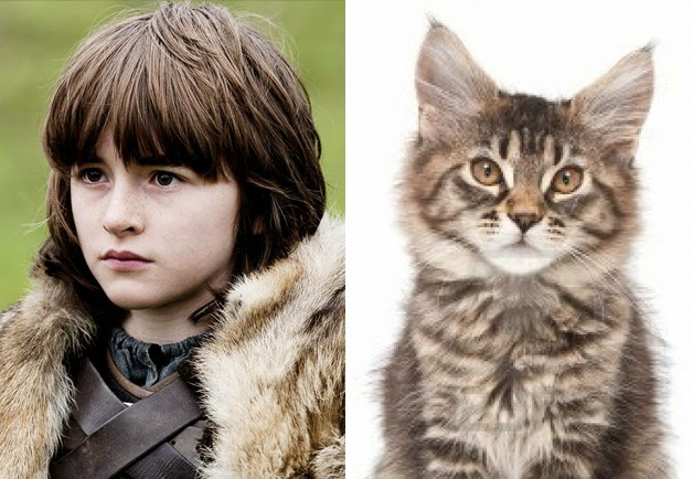 game of cats bran