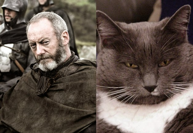 game of cats davos