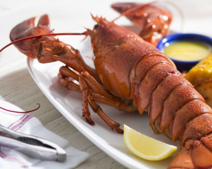 Live Maine Lobster Steamed 2609 840 672 100