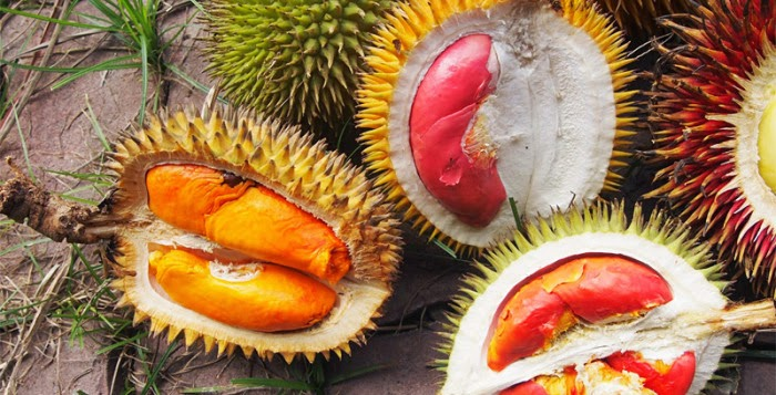 Rare durian species every enthusiast should try