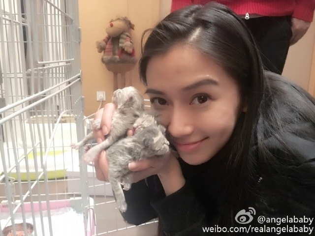 Angelababy slammed for views about pet neutering